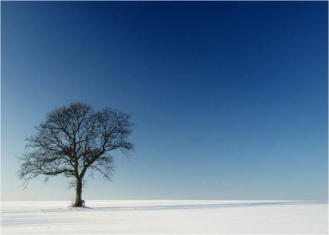 Busca el día de tu cumpleaños y encuentra tu árbol...